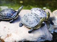 乌龟冻住了该怎么解冻?