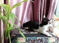 猫砂使用时怎么让猫咪觉得舒适?