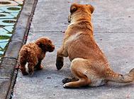 狗用的沐浴露使用时要注意什么?