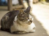 猫咪偏爱女性?