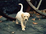 狗皮肤病常见病因及症状特点