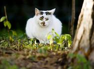 女生养猫易得神经质?