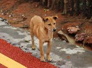 狗狗零食选择上要注意功能营养