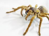 养蜘蛛需要注意哪些问题
