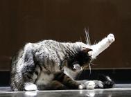 没长牙的猫咪怎么喂食?