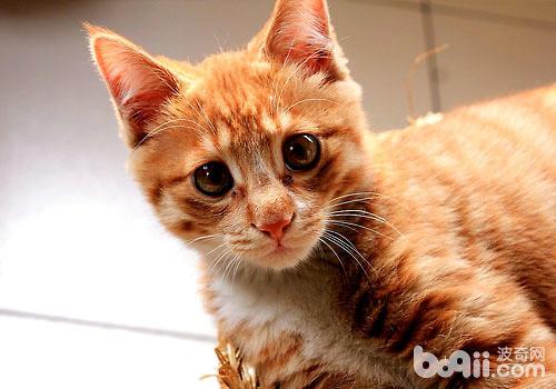 猫咪老了?老年期猫咪有哪些表现?