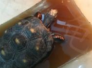 宠物龟肠胃病的治疗原则