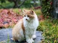 老猫猫粮怎么选?
