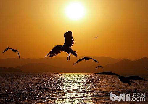 鸟群呈人字飞行可能是这样更省力