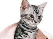 貓咪掉牙是什么原因?該怎么辦?