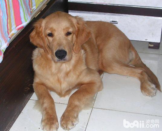 犬退烧药过敏的临床治疗