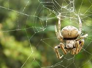 蜘蛛的浅要介绍