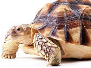 龟缸怎么除味?