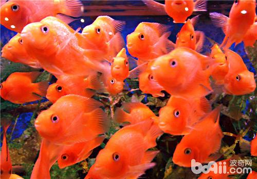 观赏鱼缸的摆放位置建议