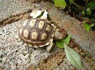 宠物龟胃管投药法和食道造口术