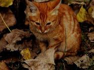 营养补充与猫咪健康