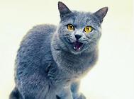 老猫猫粮选择需要高蛋白含量?