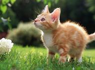怎么防止猫的毛球症