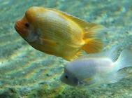 如何加强观赏鱼的抗病能力?