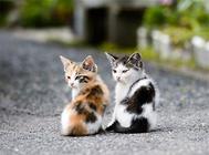 如何为三个月大的幼猫挑选猫咪玩具