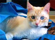 化毛膏和猫草对毛球症的作用