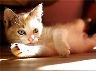 毛球症会引起猫咪死亡吗?