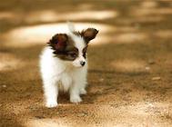 狗狗保健品之维生素的补充要点