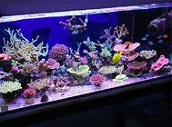 鱼缸造景中珊瑚的清洗方法