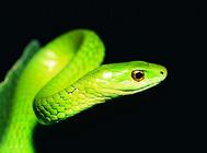 人怕蛇?蛇更怕你