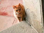 猫居家喂食要注意什么?