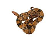 有哪些蛇用驱虫药