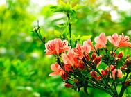 如何用香油防治植物中的蚂蚁