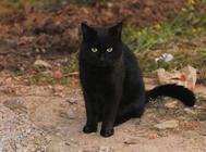 揭秘猫咪的交配行为