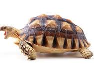 除了龟粮乌龟还能吃什么