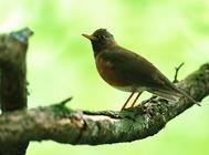 鸟嘴与其食性有什么关系
