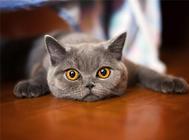 如何训练猫咪使用猫爬架
