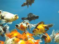 鱼缸造景需注意的六个要点