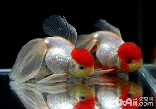 挑选鱼饲料时要注意什么