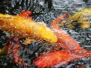 鱼食饵料的种类有哪些?