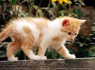 为什么要定期为猫咪驱虫