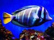 养鱼新趋势:高科技养鱼?