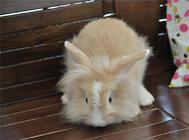 如何布置好兔子笼子