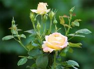 花草养护中杀虫剂的常见种类