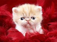 猫用驱虫药的七大注意事项