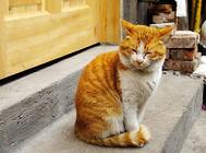 猫驱虫药种类有哪些?