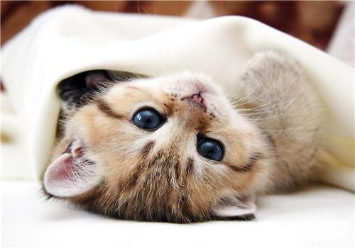 猫抓板材质的分类及特点介绍