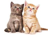 猫子宫套叠的治疗