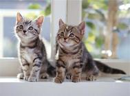 猫营养性腹水的治疗