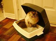 猫砂是怎么来的