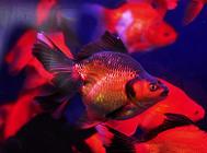 热带鱼选购的五大原则
